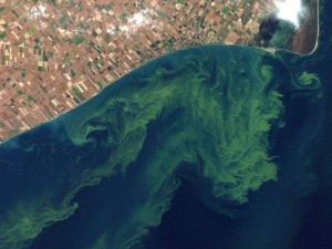 Algae blooms in Lake Eerie