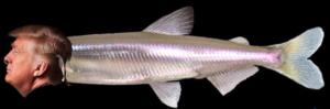trumpfish